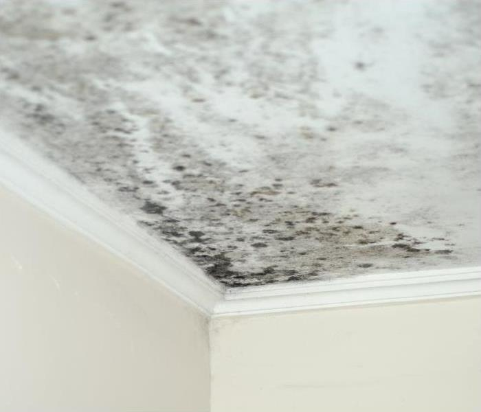 Mold Remediation The Various Types Of Mold That Could Be Growing In Your Gunnison Home