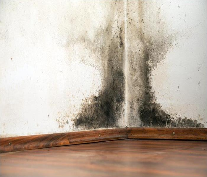 Water Damage Our Water Damage Specialists Will Protect Your Montrose Home From Microbes During The Cleanup Process