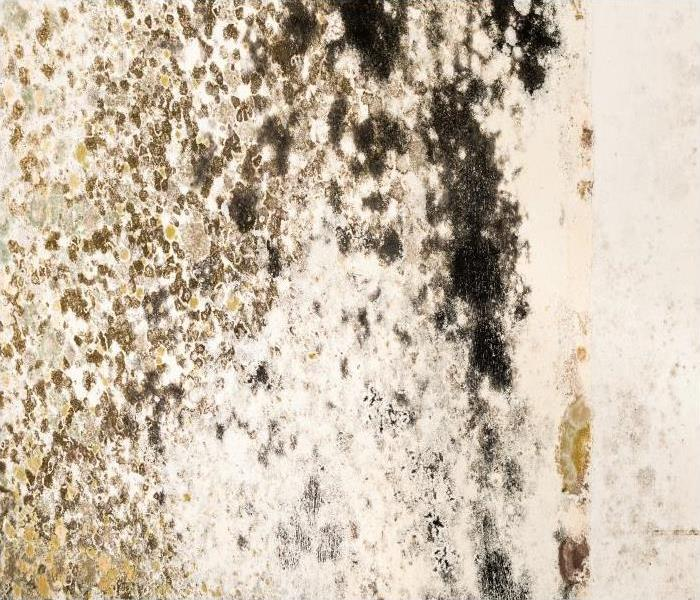 Mold Remediation Professional Mold Damage Remediation That Residents Of Gunnison Should Consider
